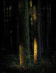 Sunlight hitting tree trunks in the dark of the forest.