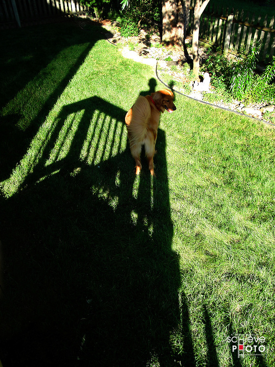 Is it a shadow or a dog?
