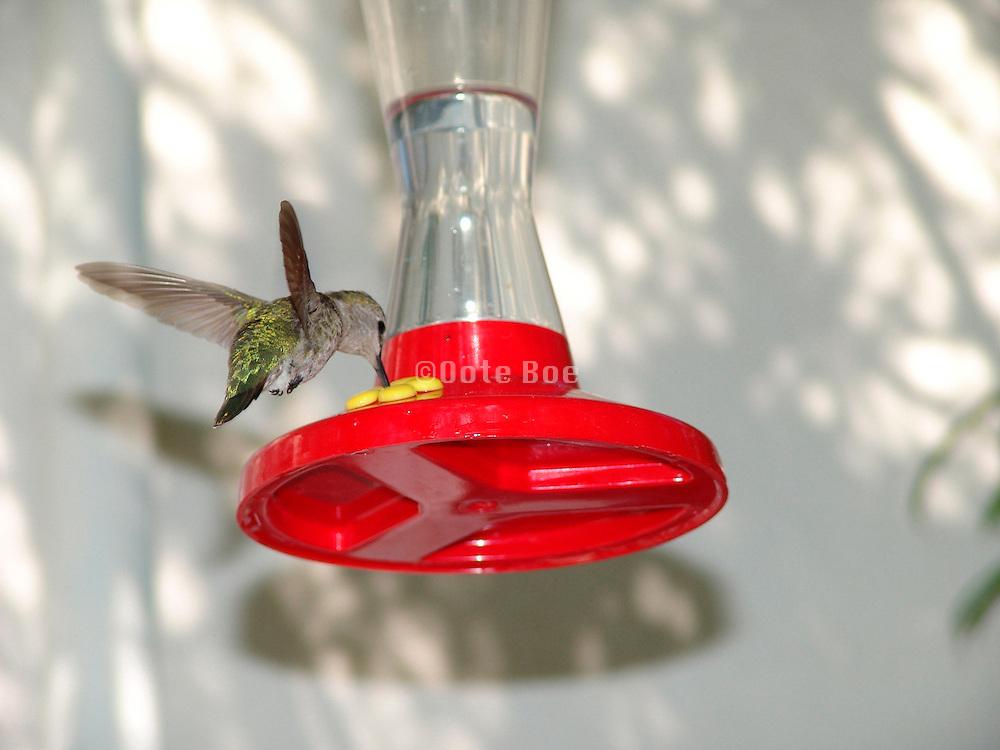 humming bird with feeder