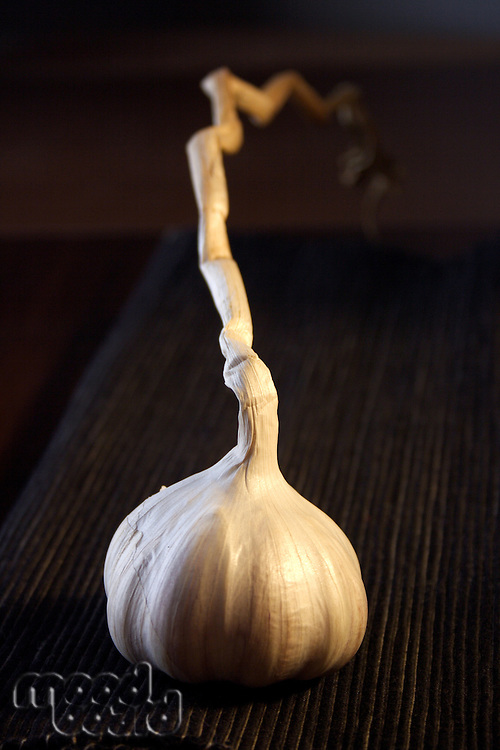 Close-up of garlic - studio shot