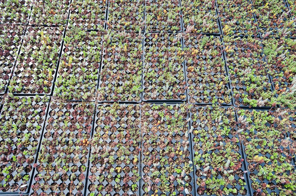 Planters.Emory Knoll Farm