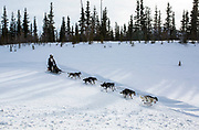 Gerry Willomitzer approaches the Alaska Highway during the biennial Silver Sled dog sledding race in Haines Junction, Yukon on March 4, 2017.