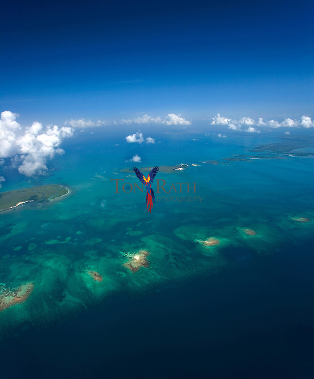 The Belize Barrier Reef and Spanish Lookout Caye, part of the Drowned Caye off Belize City , Belize