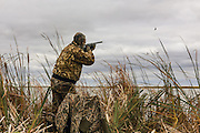 Photo No 7 of series - Hunter kills canvasback drake on open water marsh.