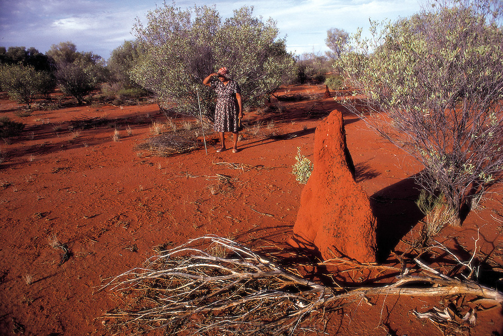 Surveying the outback, Bessie Liddle, an Aboriginal grandmother, searches through the desert for witchetty trees, a type of acacia whose roots may harbor witchetty grubs, the edible larvae of cossid moths; a termite mound in the foreground, outside Alice Springs, Central Australia. (Man Eating Bugs page 17)