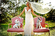 Bridal picture with wind blowing the veil and two dogs sitting beside bride in pink chairs.