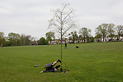 At the beginning of the fourth week of the UK government's lockdown during the Coronavirus pandemic, and with 120,067 UK reported cases with 16,060 deaths, a man stretches his leg against a young tree in Ruskin Park, a green space in Lambeth, South London, on 20th April 2020, in London, England.