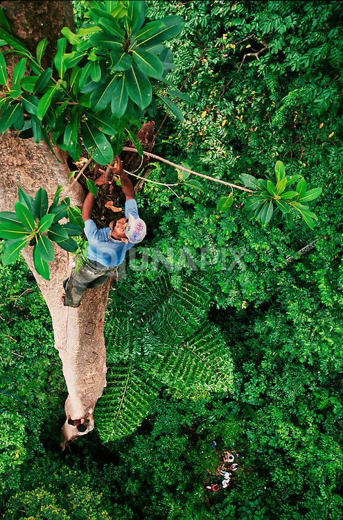 View from our first ecotourism platform, 45 meters off the deck behind the village of Sawai. Guests look tiny from that perspective!