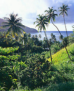 6212-1012C ~ Copyright: George H. H. Huey ~ Coconut palm trees above remote King's Bay. Northeast coast of the island of Tobago. Caribbean. Trinidad and Tobago. Caribbean.