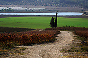 Israel, Ayalon Valley, the vines of the Latrun Trappist Monastery. founded in In the year 1887 by French monks of the Trappist order. The monks established a successful vineyard and today produce a variety of wines.