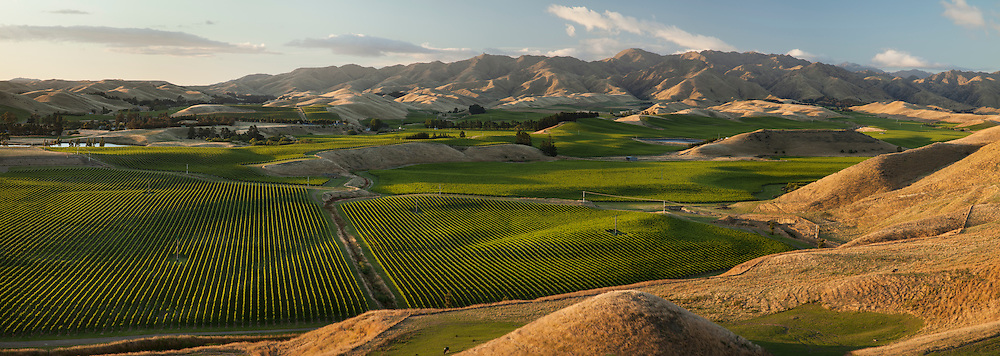 Panoramic view of vineyards in the Awatere valley, near Seddon in Malborough.