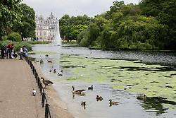 © licensed to London News Pictures. London, UK  17/05/2011. In recent days the lake in St. James Park has suffered from an algae bloom.  The algae has been thriving in the recent warm weather. Please see special instructions for usage rates. Photo credit should read Ed Brown/LNP