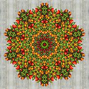 Mixed Pepper kaleidoscope mandala