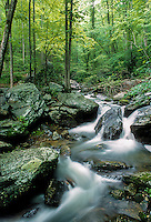 Spring mountain creek, Great Smoky Mountains National Park, Tennessee