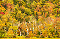 Explosion of Fall Foliage Colors, Green Mountain National Forest, Vermont