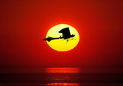 composite photo of vintage monoplane against setting sun