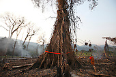 Cambodia: Tree Ordaining and the Areng Valley