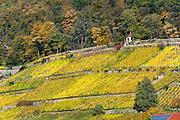 Weinberge, Pillnitz, Sächsische Schweiz, Elbsandsteingebirge, Sachsen, Deutschland | vineyards, Pillnitz, Saxon Switzerland, Saxony, Germany