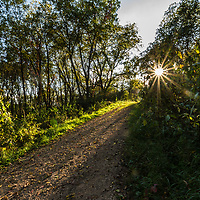 Path lit by late afternoon sun
