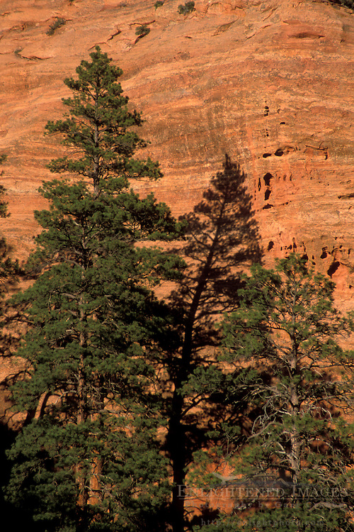 Golden sunset light on red sandstone, trees, and sheer rock cliffs in the Kolob Canyon area, Zion National Park, Utah Golden sunset light on red sandstone, trees, and sheer rock cliffs in the Kolob Canyon area, Zion National Park, Utah