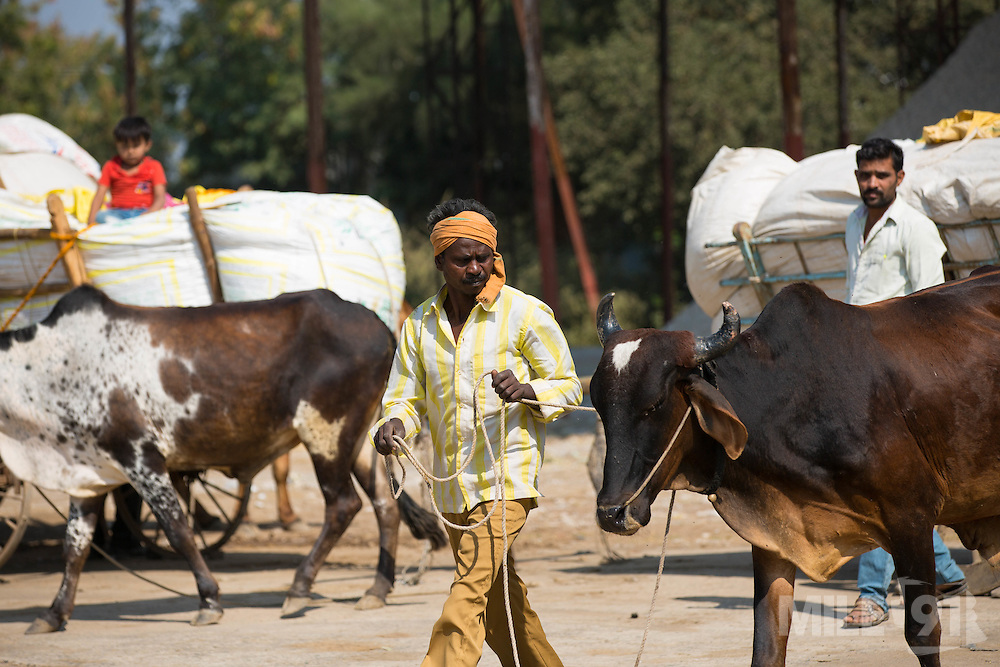 Farmers arriving at the cotton ginners in Madhya Pradesh, India.
