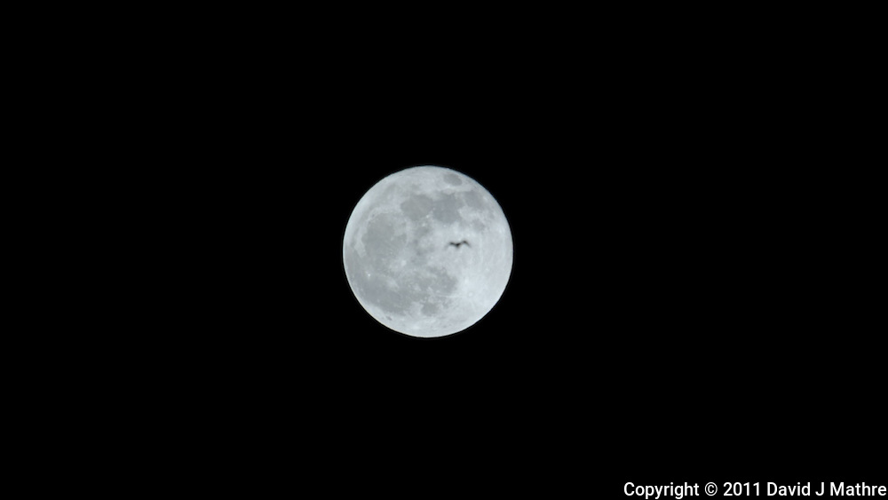 Bird Flying Past Full Moon. Frame Grab from a DSLR Video taken with a Nikon D3s and 600 mm f/4 VR llens and TC-E III 20 teleconverter