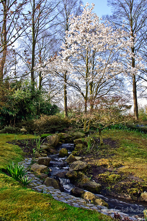 Woodland Garden at Keukenhof Spring Tulip Gardens, Lisse, The Netherlands.