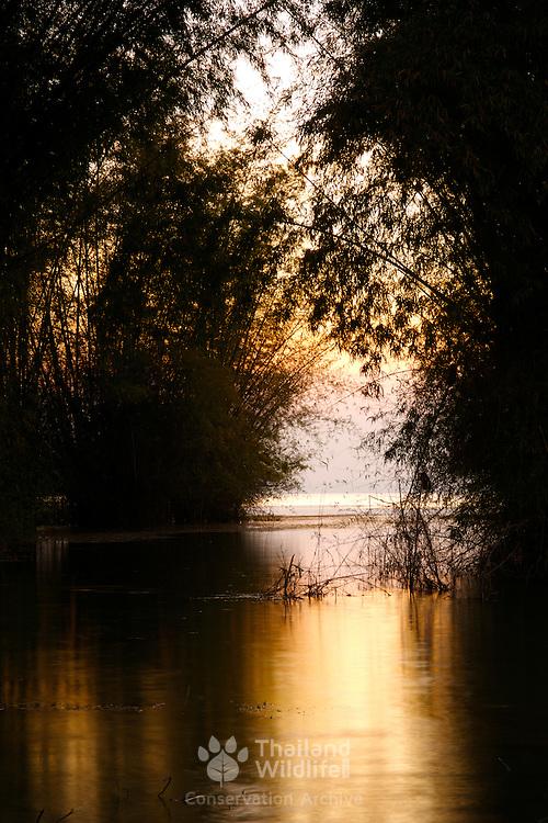Sunrise through Bamboo grove at Mae Khamin in the Khuean Srinagarindra National Park in Kanchanaburi, Thailand, February 2007.