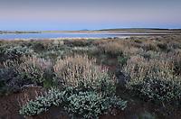 Paiute Lake and sagebrush, Hart Mountain National Antelope Refuge Oregon