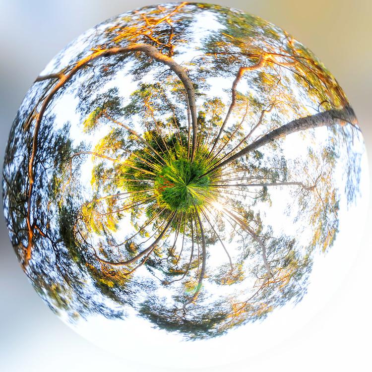 Tiny planet made in &quot;bois de Villers&quot;.<br /> Credit: Paul Marnef / Isopix