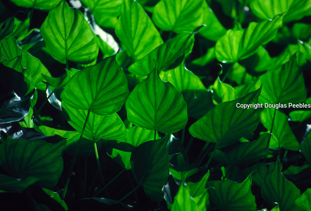 Green plant<br />