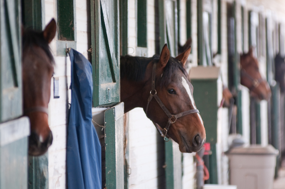 Line of horse stables
