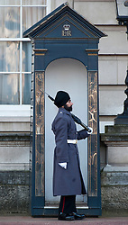 Guarding Buckingham Palace for the first time Scots guard Jatinderpal Singh Bhullar age 25 who has been allowed to wear a turban instead of the traditional bearskin, December 11, 2012. Photo by Andrew Parsons / i-Images.