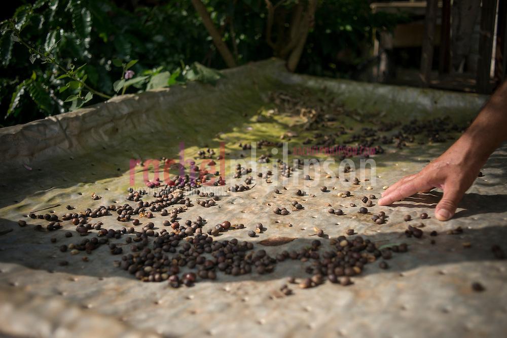 Cuba, Viñales, landscape, coffee farm, coffee beans drying