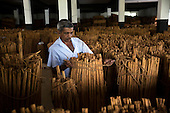 Sri Lanka - The Cinnamon Industry