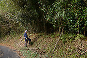 Keitarou Yokoyama entering a bamboo grove to harvest bamboo. Yokoyama Reimei Bowmakers, Miyakonojo, Miyazaki Prefecture, Japan, December 23, 2016. A handful of bowyers from the Kyushu city of Miyakonojo make over 90% of all the bows used in traditional Japanese archery. The bows are made from laminated bamboo and haze wood in process that consists of over 200 individual tasks. At over two meters from tip to tip the bows the longest used in the world.