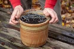 Protecting containers of newly planted bulbs from squirrels or mice by covering with chicken wire