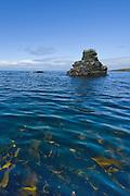 Scenes from an Icelandic coast
