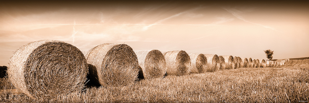 Range of hay rolls early morning, Vaud, Switzerland
