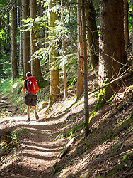 Man hiking in the Black Forest on a narrow footpath , Baden-Wuerttemerg, Germany