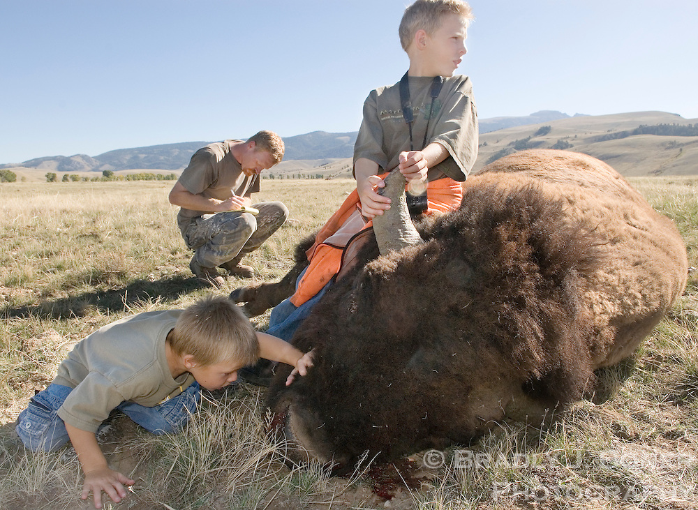 Ryker Case, 5, and his brother, Jacob, 7, investigate the bull bison shot by their father, Ryan, of Evanston on the opening day of the bison hunt on the National Elk Refuge. Case's bison was the first kill of the first hunt on the refuge since 1988.