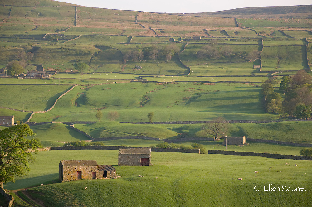 Stone barns and walls on a hillside near Bainbridge, Wensleydale in the The Yorkshire Dales National Park, UK