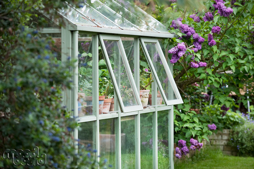 Greenhouse in back garden with open windows for ventilation