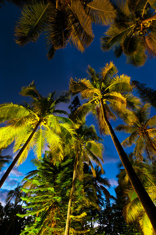 Palm trees, Le Meredien Ile des Pins beach resort hotel, Baie d'Oro (Oro Bay), Ile des Pins (Isle of Pines), New Caledonia