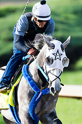 Derby 142 hopeful Creator with Abel Flores up put in their final work, Monday, May 02, 2016 at Churchill Downs in Louisville.