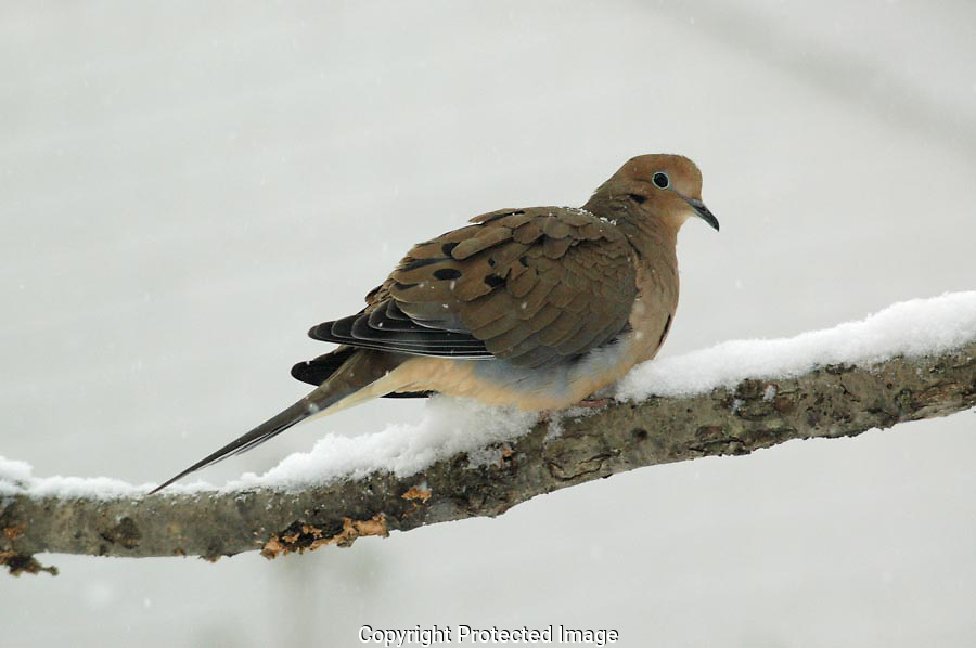 The dove looked over its shoulder as if to see if it needed to worry about me.  It decided I was not a threat and sat as I passed.