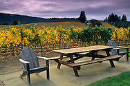 Goldeneye Vineyards, near Philo, Anderson Valley, Mendocino County, California