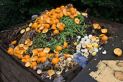 Fruit and veg waste rotting in a south London compost bin.