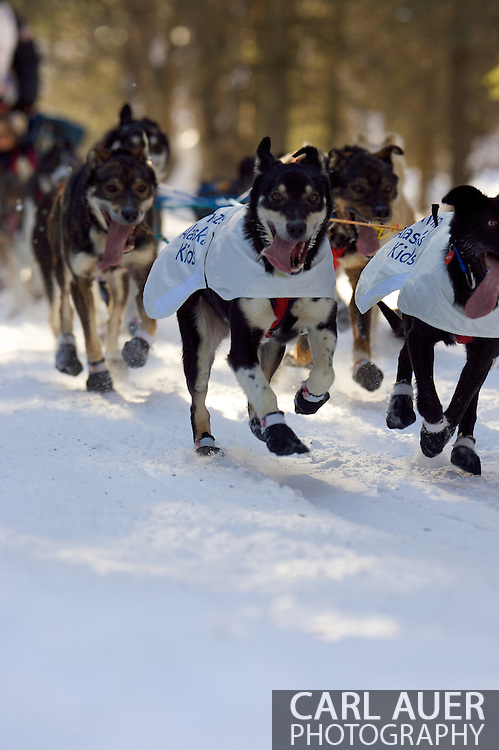 March 7th, 2009:  Anchorage, Alaska - The team of Ken Anderson of Fairbanks, Alaska heads through the woods near the Alaska Native Hospital during the ceremonial start of the 37th Iditarod.