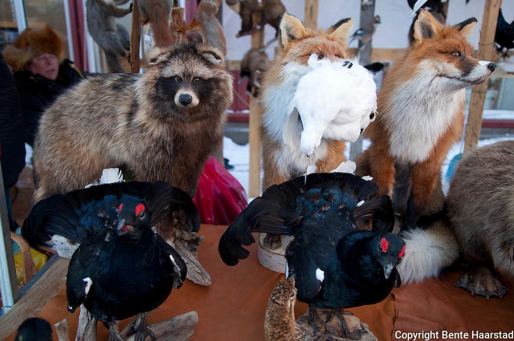 Utstoppet mårhund, orrfugl og rødrev til salgs. Rørosmartnan winter fair, 2012.